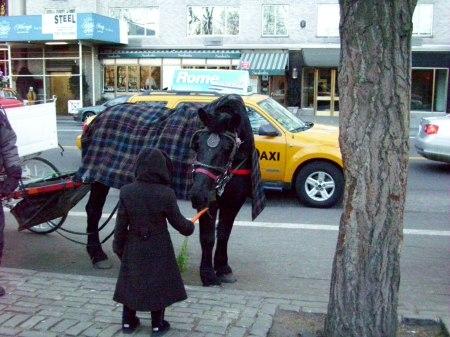Hansom Horse